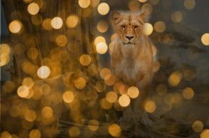 lion-581956_1280
