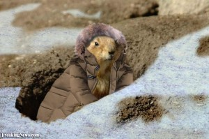 Groundhog-Wearing-a-Winter-Jacket--37040